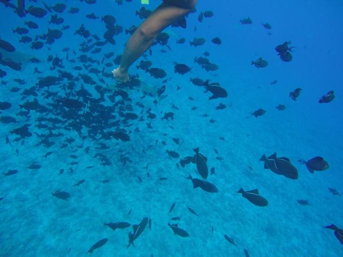 海岛控的圣地--大溪地波拉波拉瑞吉游走在paradise的六天