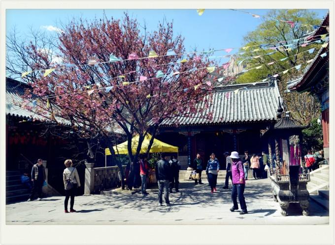 春天画报——青岛崂山