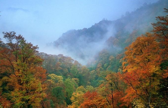 光雾山风景区