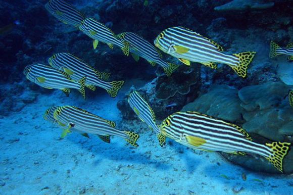海龙,海马,食人蟹,澳大利亚锦龙虾,八爪鱼,海龟等,它们都在海底世界等