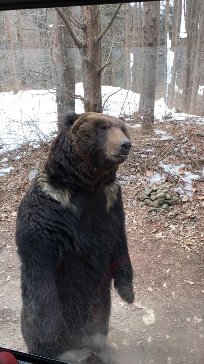 到了动物王国,看了友好牧场里可爱的动物宝宝,狮子老虎和北极熊,北极