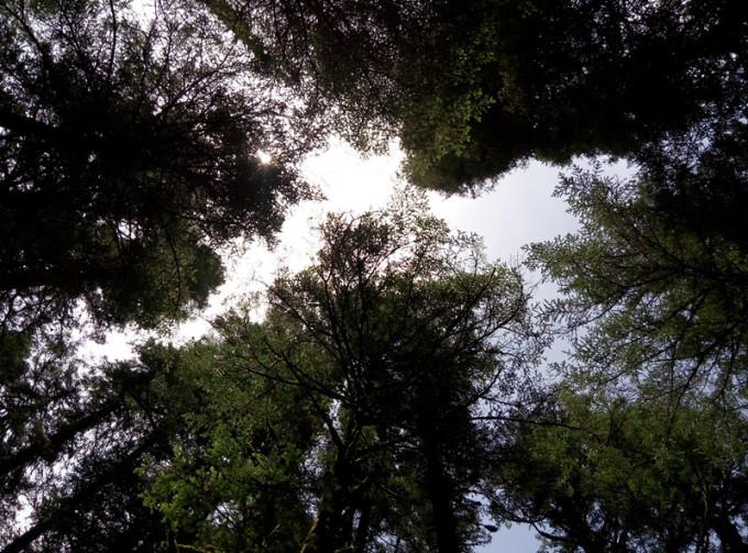 森林耳语的秘境白马王朗