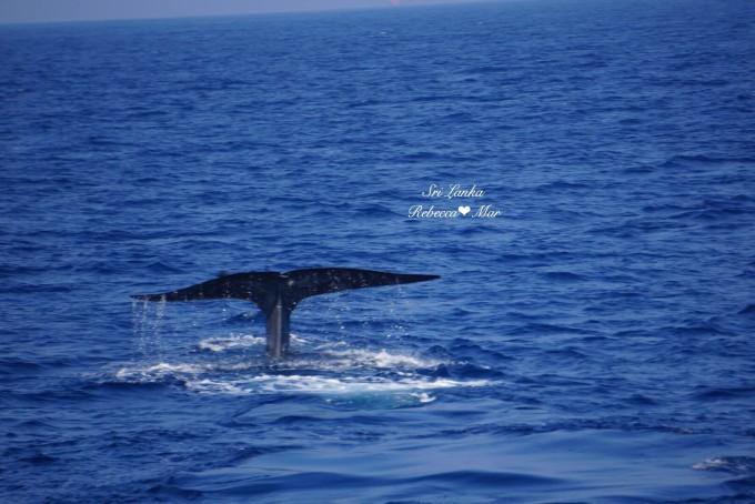 壁纸 动物 海洋动物 桌面 680_454