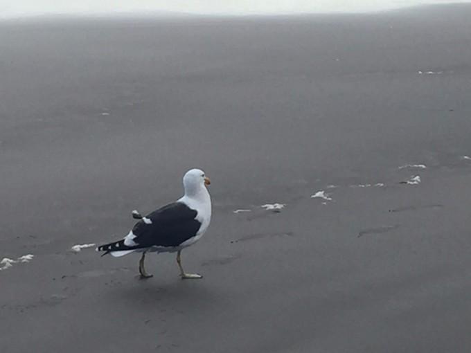 动物 鸟 鸟类 680