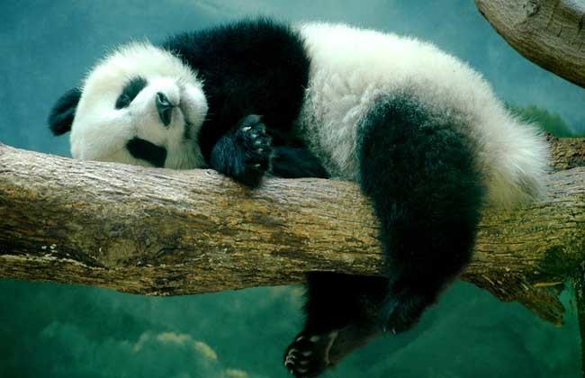 夏天要睡觉的动物有哪些图片
