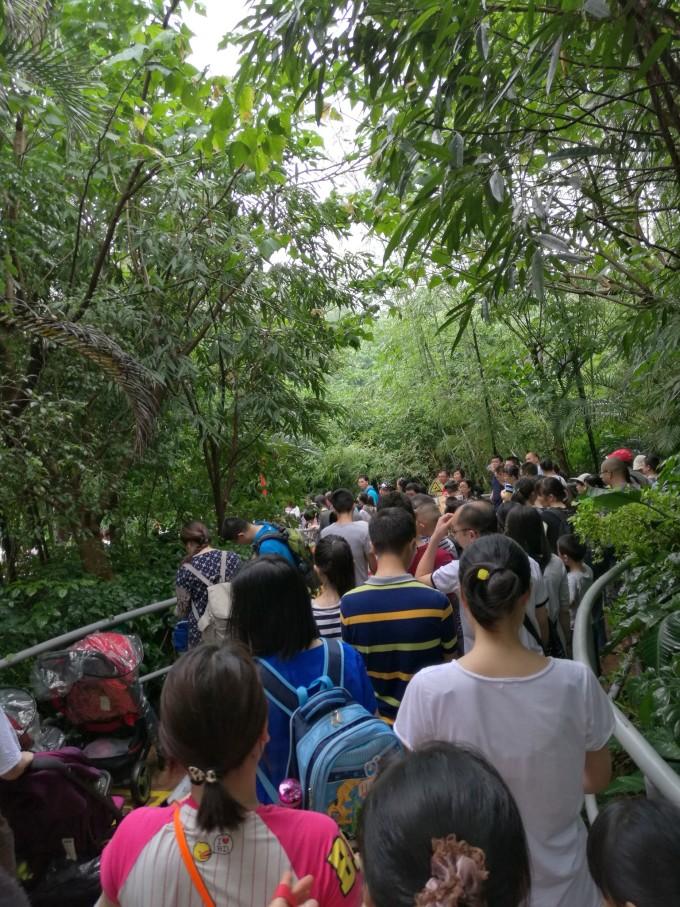 广州长隆野生动物园&珠海长隆海洋王国:动物园狂魔的
